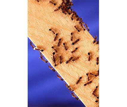 termitas-hormigas-ratones-cucarachas-ratas-plagas-en-casa