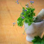 plantas-medicinales-botanica-manzanilla-beneficios-te-salud