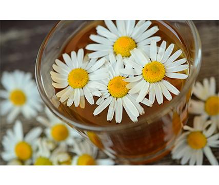 plantas-medicinales-jardin-en-casa-beneficios-salud-enfermedades