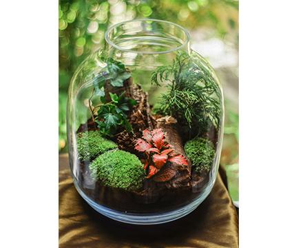 terrarios-plantas-para-interiores-suculentas-naturaleza